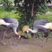 В Большереченском зоопарке состоится праздник