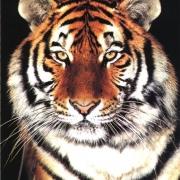 Московский цирк Никулина привез омичам тигров