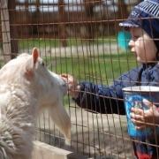 Большереченский зоопарк встретит детей