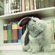Комбикорм для кроликов и его использование